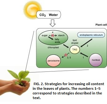 green power synthesis essay Essay writing basics  harnessing solar power in organic synthesis  synthesis, organic chemistry, green chemistry would suit an applicant who.
