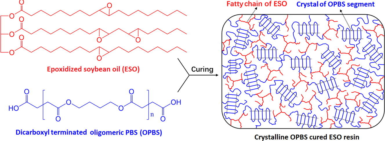 Crosslinking of an epoxidized soybean oil with a bio-based curing agent